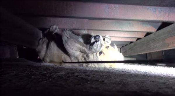 Très émouvant : le sauvetage de cette chienne abandonnée !
