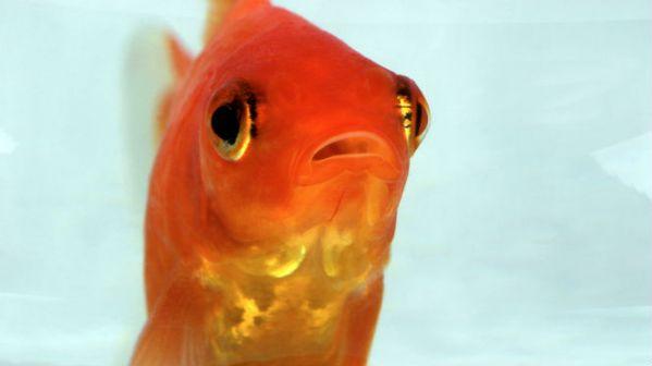 Le &quot;Fish-Gape&quot; ou la nouvelle &quot;Duck-<strong>face</strong>&quot; !