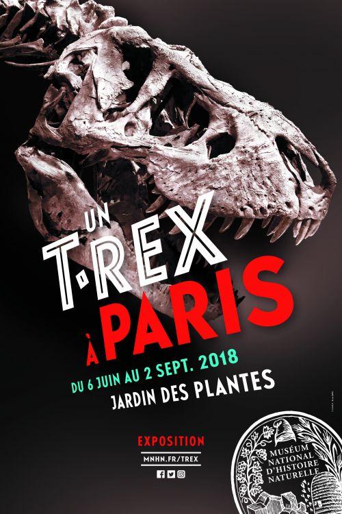 Un T Rex A Paris L Exposition Au Museum National D Histoire Naturelle