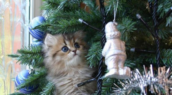 Vid o best of quand les chats s en prennent aux sapins - Quand mettre le sapin de noel ...