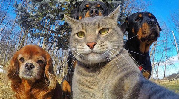 Quand Les Animaux Se Mettent à Prendre Des Selfies, ça Donne ça!