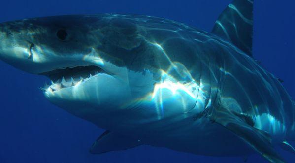 Il Va Nager En Cachette, Un Requin Lui Arrache Le Pénis !