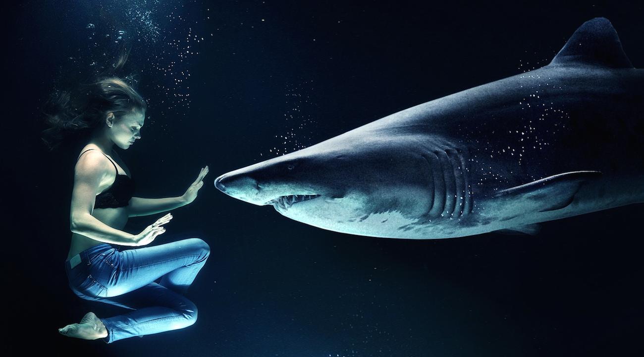 Australie : Elle Nourrit Un Requin, Il Lui Croque L'index