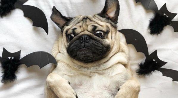 Halloween : Les meilleurs déguisements pour chien trouvés sur la toile !