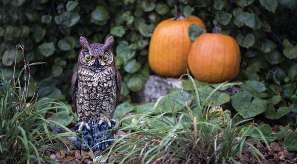Halloween : Quelques idées pour faire la fête !