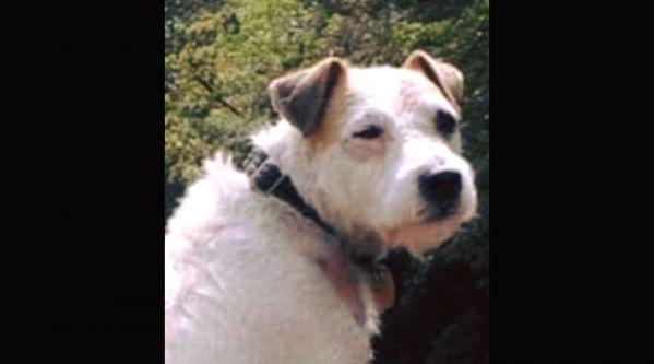 Côte-d'Or : Billy, le chien coincé depuis 6 jours a été sauvé !
