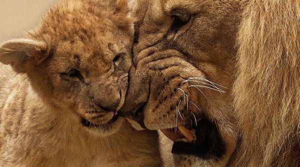 Le Roi Lion : Le film fait un démarrage hors norme au box-office !