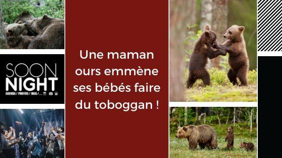Une maman ours emmène ses bébés faire du toboggan !