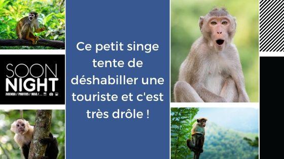 Ce petit singe tente de déshabiller une touriste et c'est très drôle !