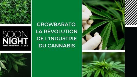 Growbarato, la révolution de l'industrie du cannabis