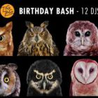 ZIG ZAG BIRTHDAY BASH : ALEX & LAETITIA, AMNAYE, ANDRADE, DAVID DURIEZ, ERIC LABB�, F.E.
